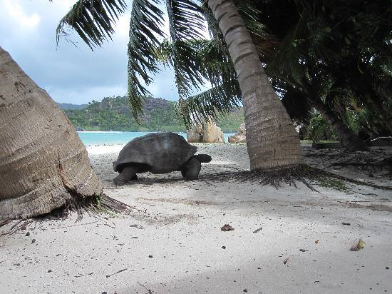 Seychelles cosa vedere Curieuse tartaruga gigante