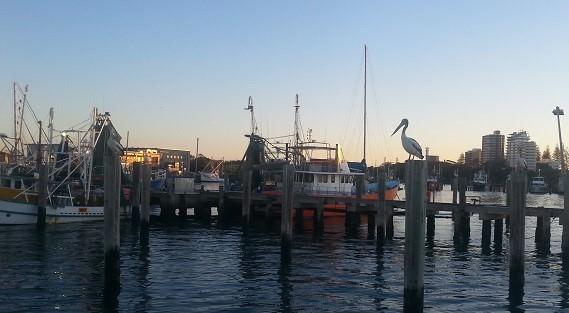 Maroochydore porto australia