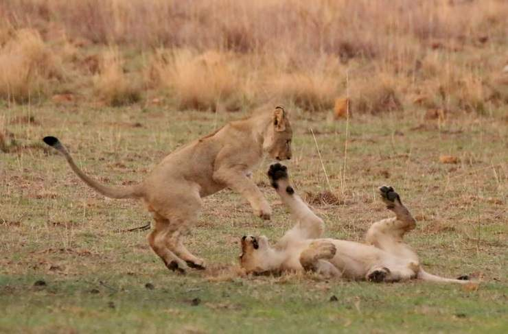 safari malaria free