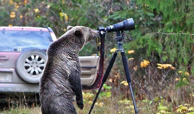 Dove vedere gli orsi in Canada? Ecco i 4 migliori posti per osservarli