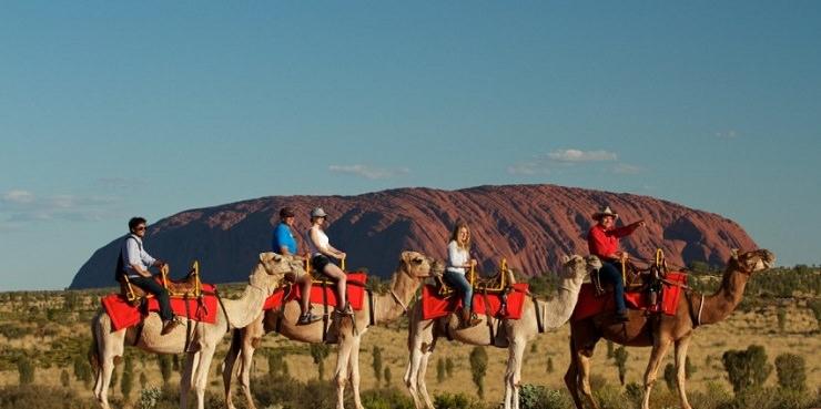 Uyers Rock escurione cammelli