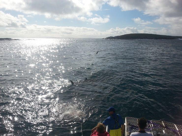 Port Lincoln Neptune Island