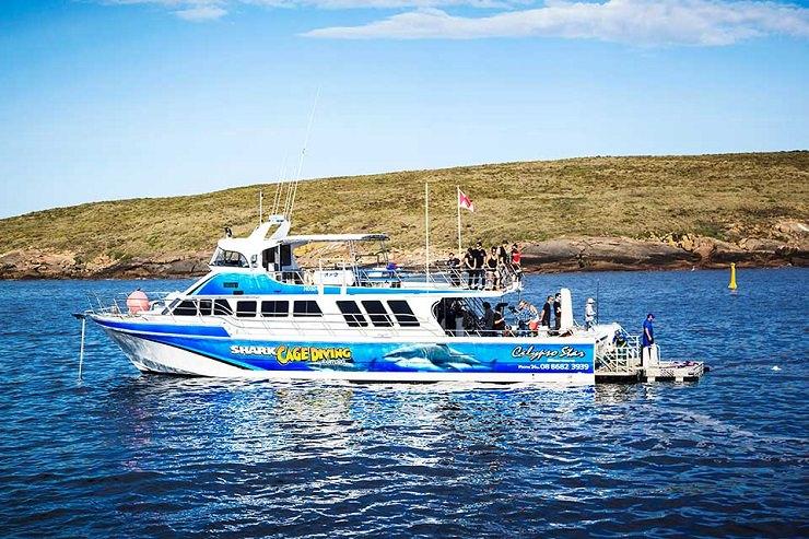 Port Lincoln immersioni squalo bianco escursione
