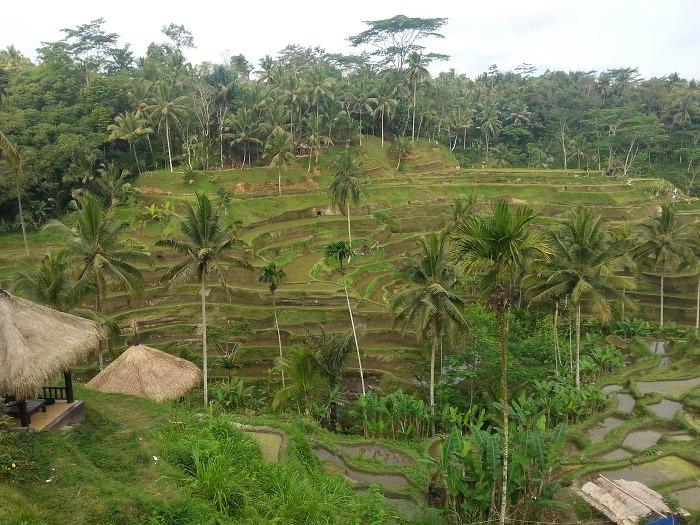 terrazza di riso ubud cosa vedere
