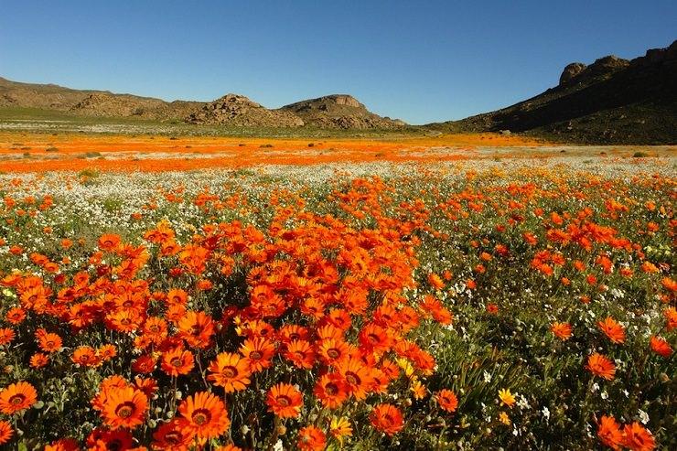 campo fiorito sudafrica cose da vedere