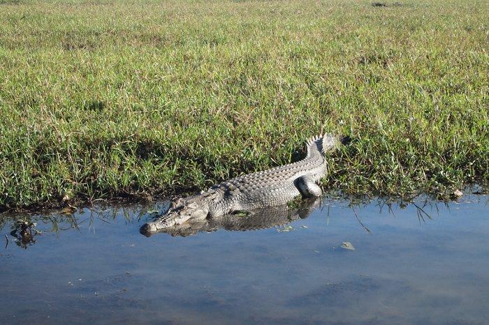 Kakadu coccodrili Billabong